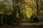 Herbstlaub-Gang