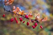 Herbstfarben von Hias
