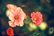 Blumenmalerei von Hias