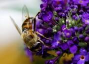 Insekten von Digitom