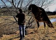 Vogelfütterung- Art 274 von Digitom