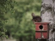 Eichhörnchen von ArtR