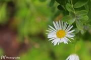 Natur & Pflanzen von Sandra