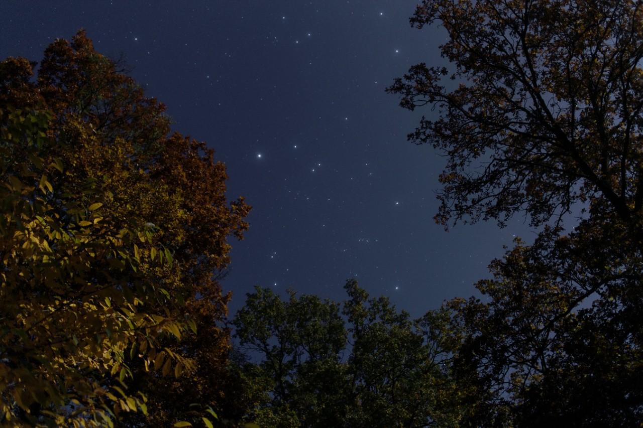 Mondnacht im Herbstwald - 26.10.2015