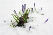 Ein Ausbleiben des Schnees