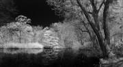Tiergarten mit 700nm FIlter aufgenommen