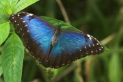 Schmetterlingsgarten Friederichsruh