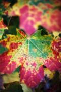 Farben des Herbstes vereint