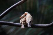 Finkenpaar