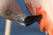 Flamingo-Putz