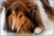 Hunde - Portrait