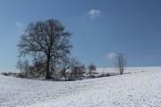 Wintereiche