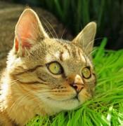 Katze beim Sonnenbad.