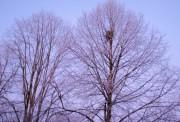 Winterschlaf der Bäume