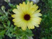 Blüte von blacky1