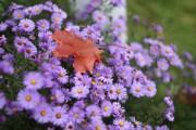 Sommer vs. Herbst