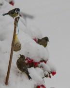 Winterfütterung