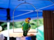 Papagei in einem Marktstand