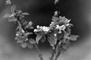 Frühling auf alt