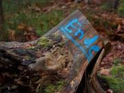 Ende eines Baumes