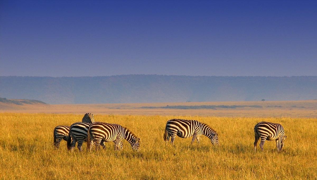 Serengeti - endlose Weite