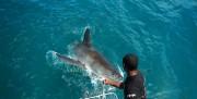 Hautnah mit dem großen weißen Hai