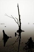 Nebelmorgen am Loch Eck