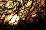 Sonnenaufgang durch knospende Bäume