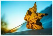 Herbststimmung von Namenloser