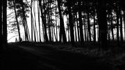 Waldspaziergang Schlunkendorf