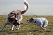 Und noch ein Hundebild...(Attacke)
