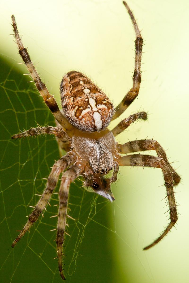 Und noch eine Spinne